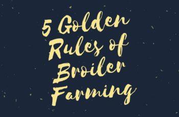 broiler farming