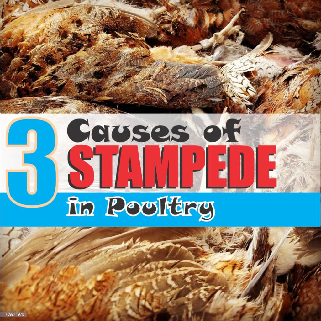 causes of stampede