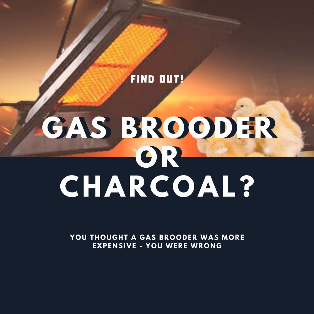 Gas brooder or charcoal