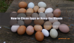how to clean eggs