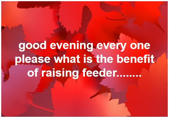 why should we raise chicken feeders?