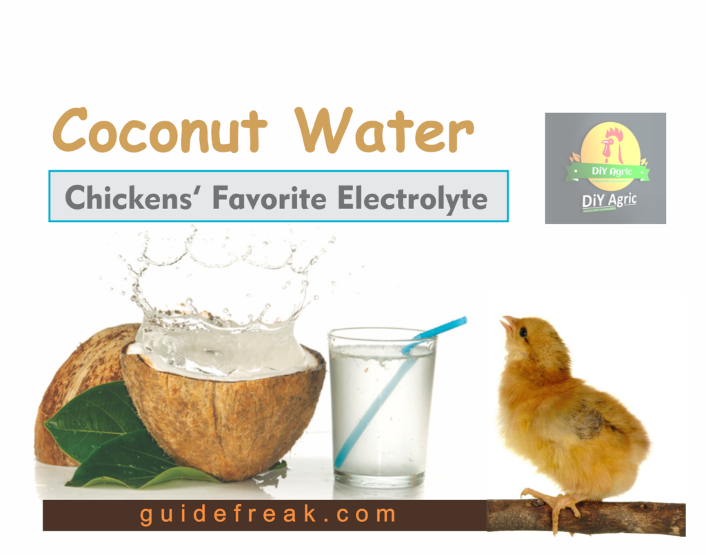 coconut water for chickens