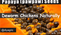 how to deworm chickens naturally